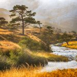 Highlands in the Autumn