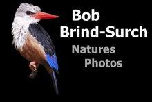Bob Brind-Surch